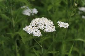 Fix It Herbal Salve ingredient
